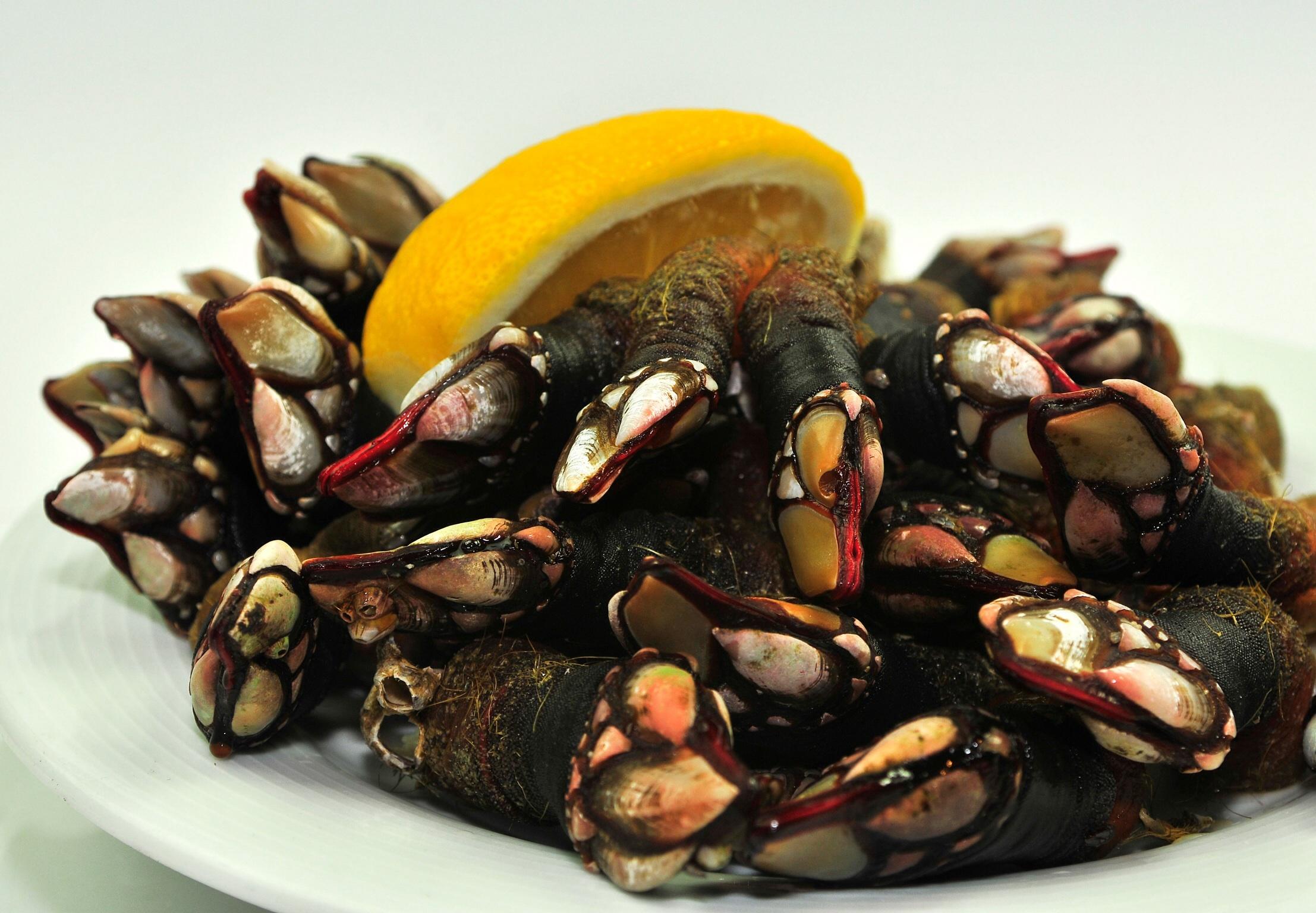 Foto de percebes en el Restaurante El Pasaje. primera app de un restaurante en Galicia