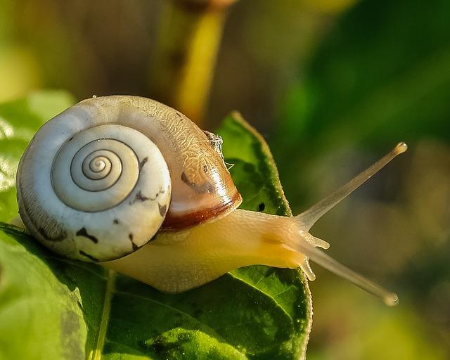 Slow Travel, snail