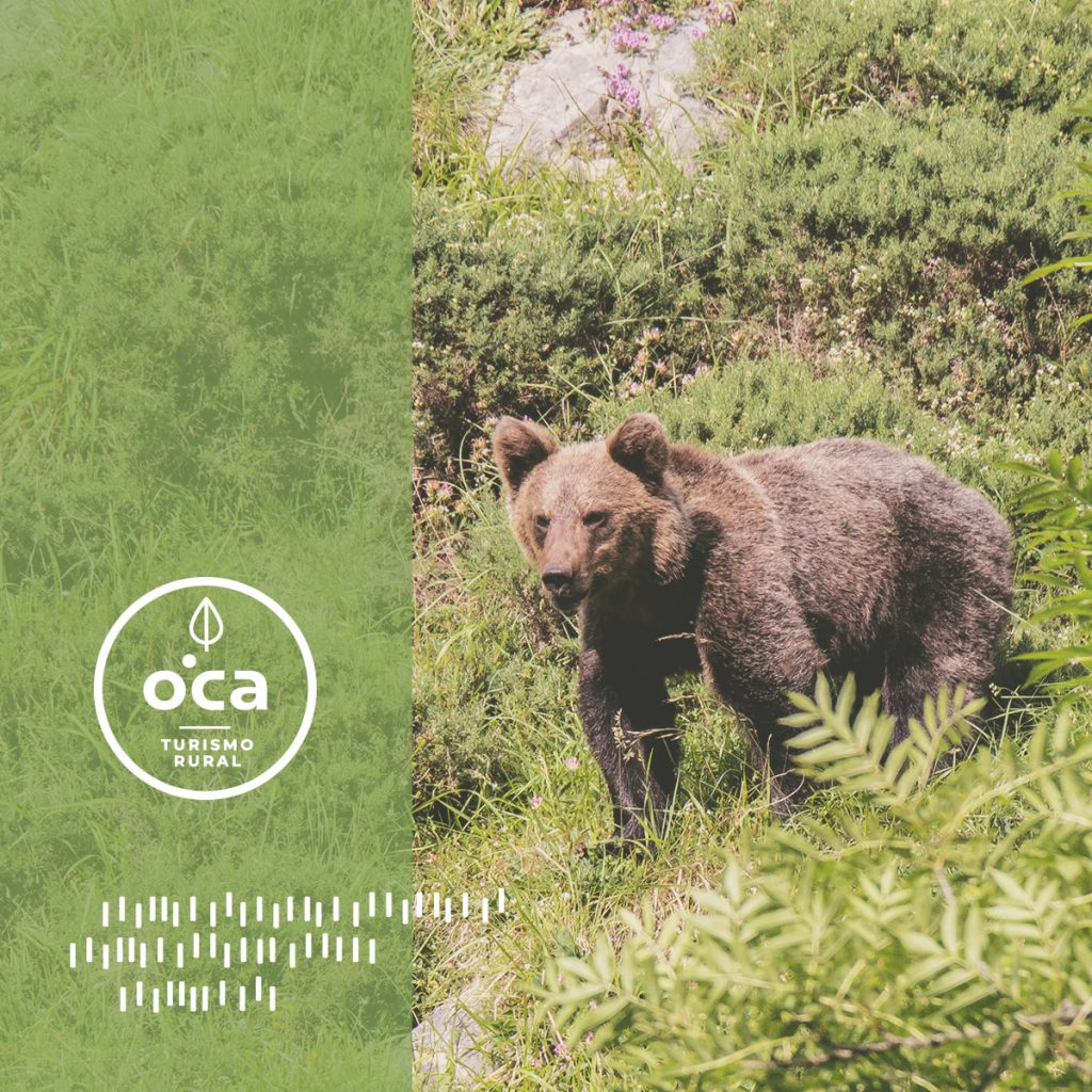Mr Turismo para OCA Hotels